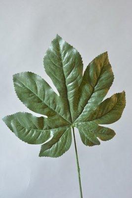 Aralia blad, 50cm