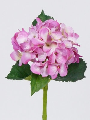 Hortensia 48cm, fuchsia