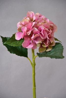 Hortensia, 48cm Roze