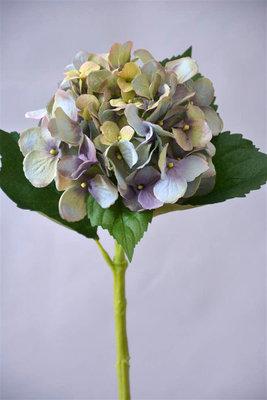 Hortensia, 48cm blauw groen