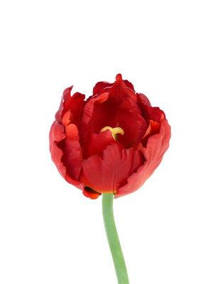 Tulp rood, 25cm
