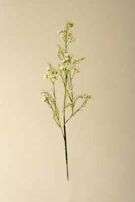 Waxflower wit, 68cm