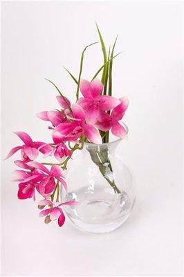 Orchidee in glas, fuchsia