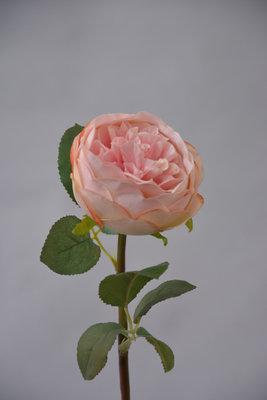 Roos Roze, 47cm