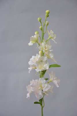 Delphinium, wit, 60cm