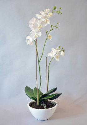 Orchidee arrangement, 90cm
