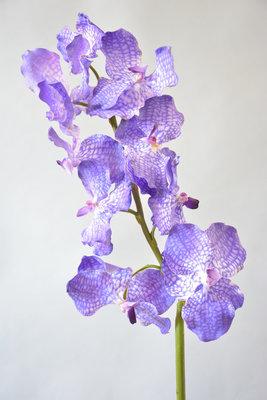 Luxe vanda orchidee, 83cm