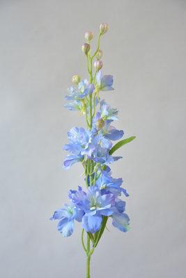 Delphinium, licht blauw, 60cm