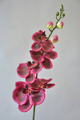 Orchidee, paars, 70cm