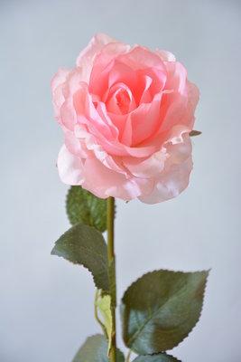 Roos 64cm, roze