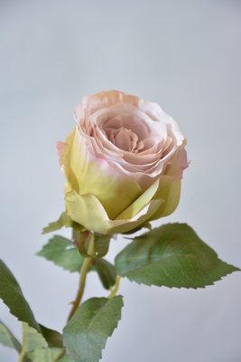 Roos 56cm, lavendel