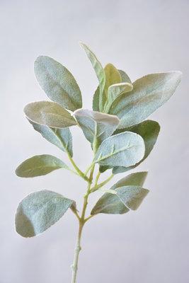 Lamsoor 35cm, groen