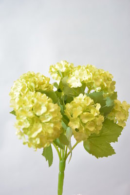 Viburnum bosje, 25cm