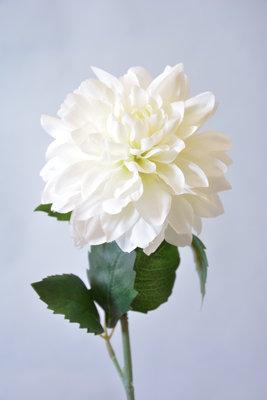 Dahlia 50cm, wit