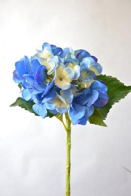 Hortensia, 48cm blauw