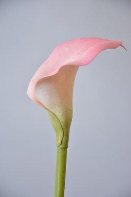 Calla, 48cm roze