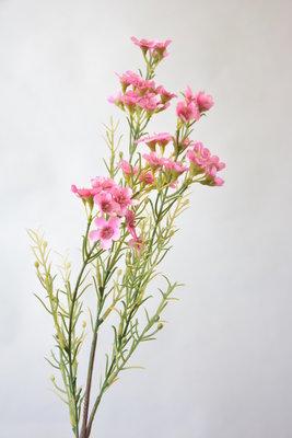 Waxflower roze, 68cm