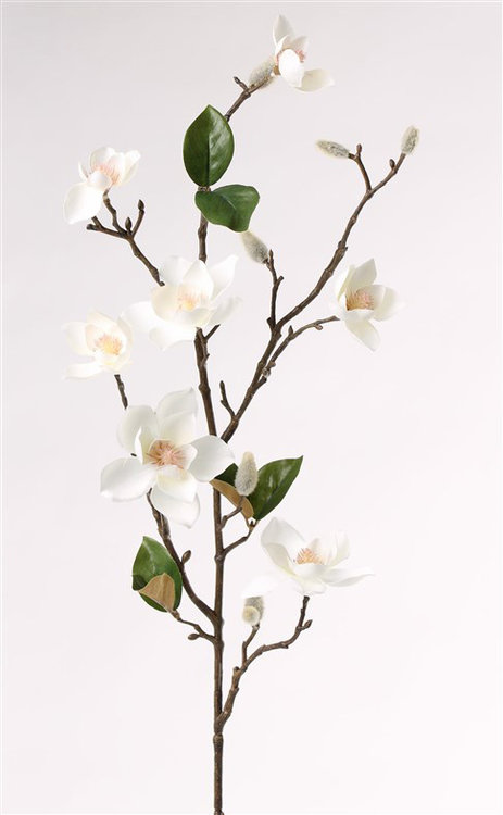 6x Magnolia spray (kleinbloemig) x7 flrs