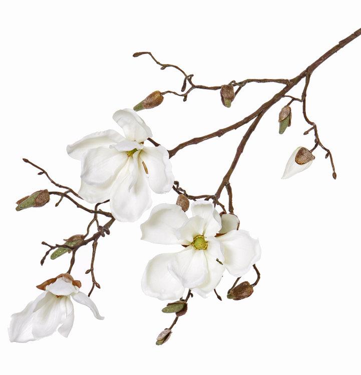 6x Magnoliatak met 3 bloemen