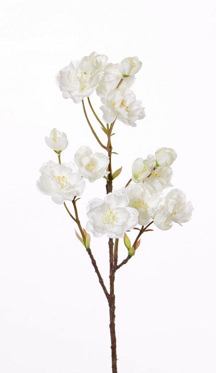 12x Prunus serrulata (Japanse sierkers) 9 bloemen & 6 knoppen