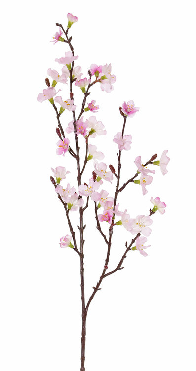 12x Sakura bloesemtak (Prunus jamasakura)