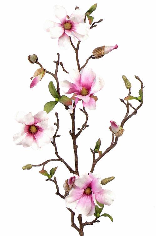 12x Magnolia fijn steek