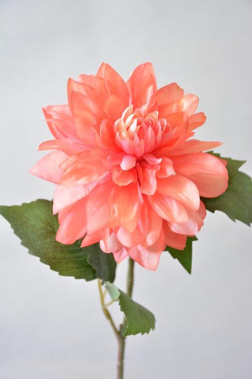 Dahlia 50cm, roze