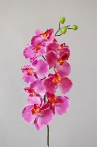 Orchidee Fuchsia, 101cm