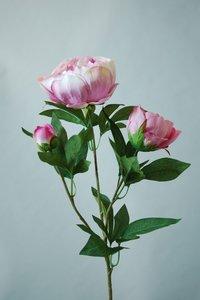 Pioenroos roze, 70cm