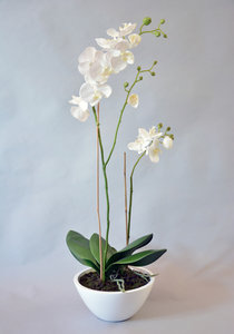 Orchidee arrangement