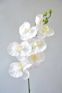 Orchidee, wit, 70cm