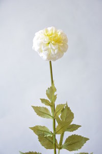 Pompondahlia 48cm, wit