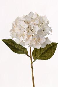 """Hortensia """"Allure"""", 71cm"""