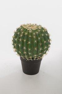 Kunst cactus