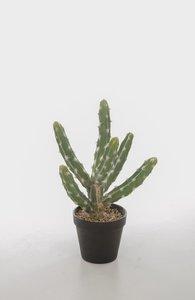 Euphorbia Trigena Kind of Basin Pot 38cm